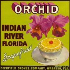 Orchid Label